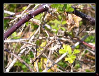 Like a twig by keitaseb