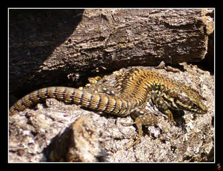 Lizard again by keitaseb
