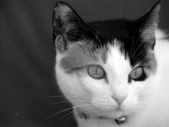 Cat by jOy--jOy