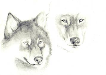 Wolf friends by jOy--jOy