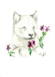 Wolf cucciolo by jOy--jOy
