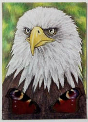 Bald eagle ATC by CrazyEdzia