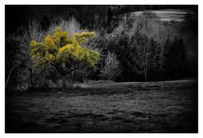 austrian trees 1 by sorny