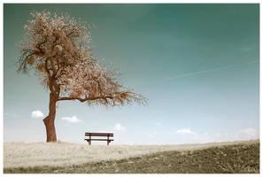 austrian tree 6 by sorny