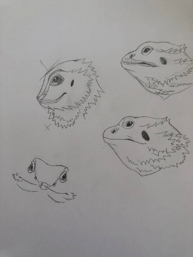 Bearded Dragon Practice by ReesyTaters