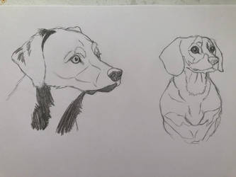 Learning to Draw My Dogs by ReesyTaters