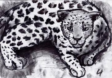 Big Cat Diary by YumeDeli