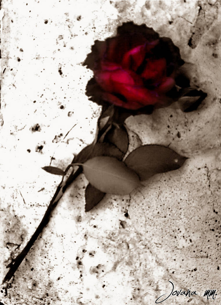 A rose for the dead. by Saturns-Child ...