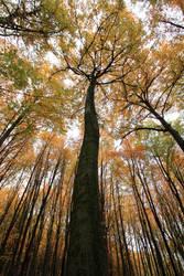 Autumn skies by Kensee