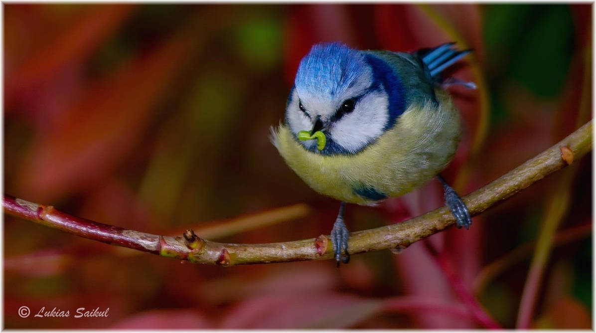 Early bird gets good worm! by lukias-saikul