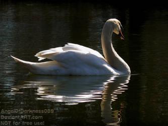 Beautiful Swan by AngelOfDarkness089