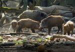 Lots of Wild Boars by AngelOfDarkness089