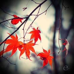 it's autumn. by einfachso