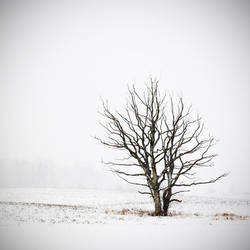 in white darkness by vonrubinstein