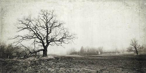 late november by vonrubinstein