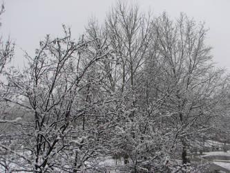 Winter by roadrunner13