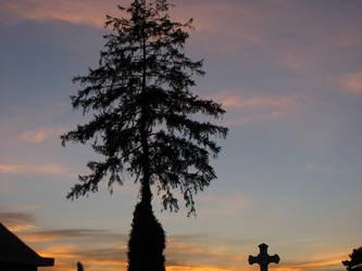 daing tree by roadrunner13