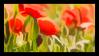 Poppies Stamp by JassysART