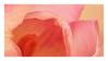 Pink Flowers Stamp 003 by JassysART