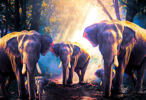 Elephants Family - Wallpaper by JassysART