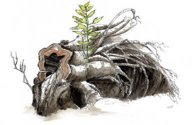 Fallen tree by rod-roesler