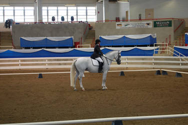 Dressage 11 by anneandstock