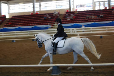 Dressage 12 by anneandstock