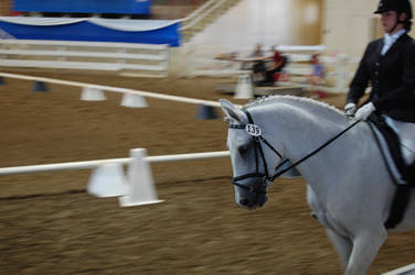 Dressage 15 by anneandstock