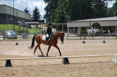 Dressage 21 by anneandstock