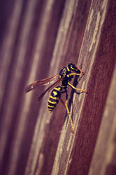 Wasp 2 by PontifeX-Lepus