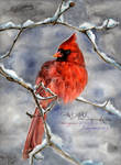 CARDINAL by emmagucci