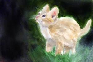 Cute Kitten by masaad