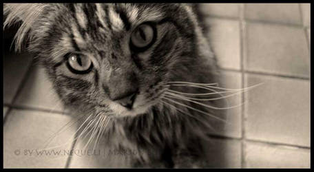 .:.cat.04.:. by nebelelfe