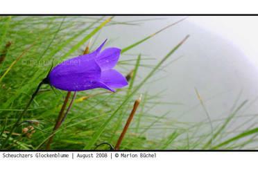 .:.scheuchzers.glockenblume.:. by nebelelfe