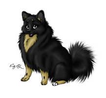 Sophie the Pomeranian by lulabug