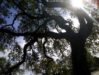 TREE by impy20