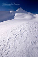 Antartica by vincentfavre