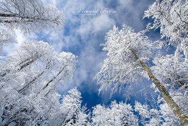 White forest... by vincentfavre