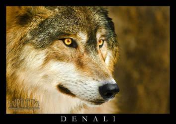 Denali by Lupinicious