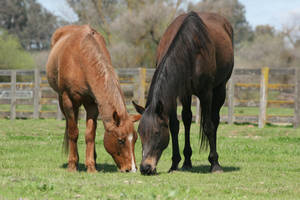 Horses grazing in pasture by HorseStockPhotos