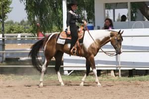 Buckskin Paint Horse Gelding, Western by HorseStockPhotos