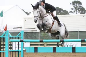 Dapple Gray Warmblood Grand Prix Jumpers by HorseStockPhotos