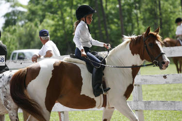 Chestnut pinto mare hunter under saddle by HorseStockPhotos