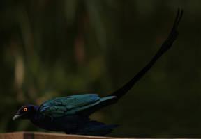 Microraptor by unlobogris