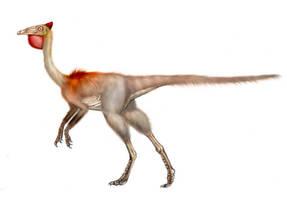 Pelecanimimus polyodon by unlobogris