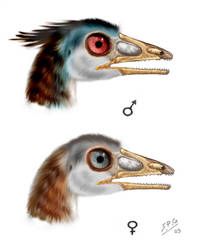 Archaeopteryx lithographica by unlobogris