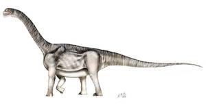Camarasaurus lentus by unlobogris