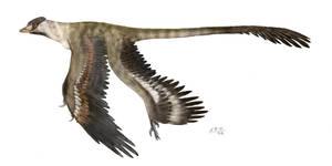 Microraptor gui by unlobogris