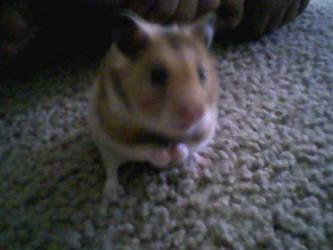Pet Pet8DD by RedMistress17
