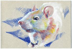 Rat 06 by nuances-curieuses